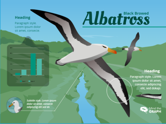 Albatross Template